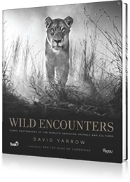 Wild Encounters : Iconic Photographs of the World's Vanishing Animals and Cultures