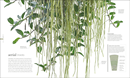 Flora : Inside the Secret World of Plants - Book - 3