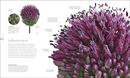Flora : Inside the Secret World of Plants - Book - 6