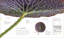 Flora : Inside the Secret World of Plants - Book - 8