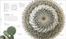 Flora : Inside the Secret World of Plants - Book - 1