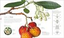Flora : Inside the Secret World of Plants - Book - 4