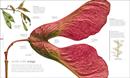 Flora : Inside the Secret World of Plants - Book - 2