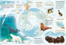 The Amazing Animal Atlas - Book - 4